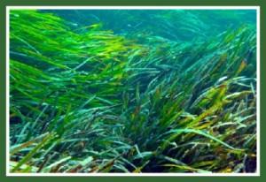 aquatic-habitats